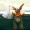 灰兔兔photo