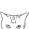 猫十一摄影